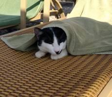 местные коты спасаются от ультрафиолета