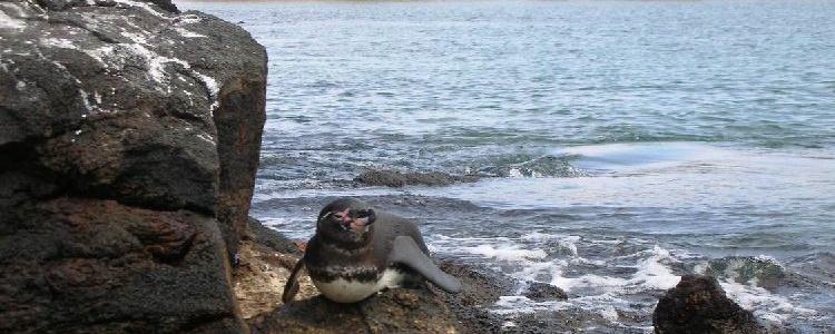 Улыбающийся пингвинчик