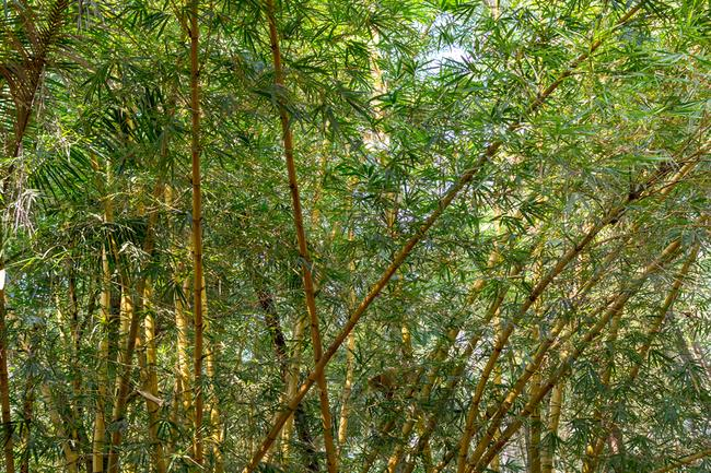 Вид с балкона. Бамбук.