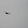 Аппачи в воздухе - Акаба