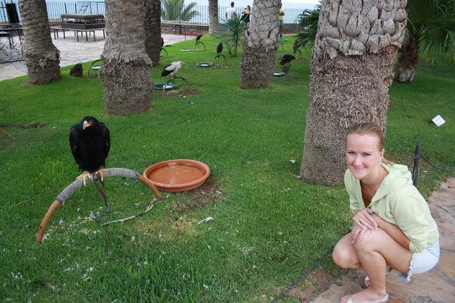 Выставка хищных птиц в крепостном саду