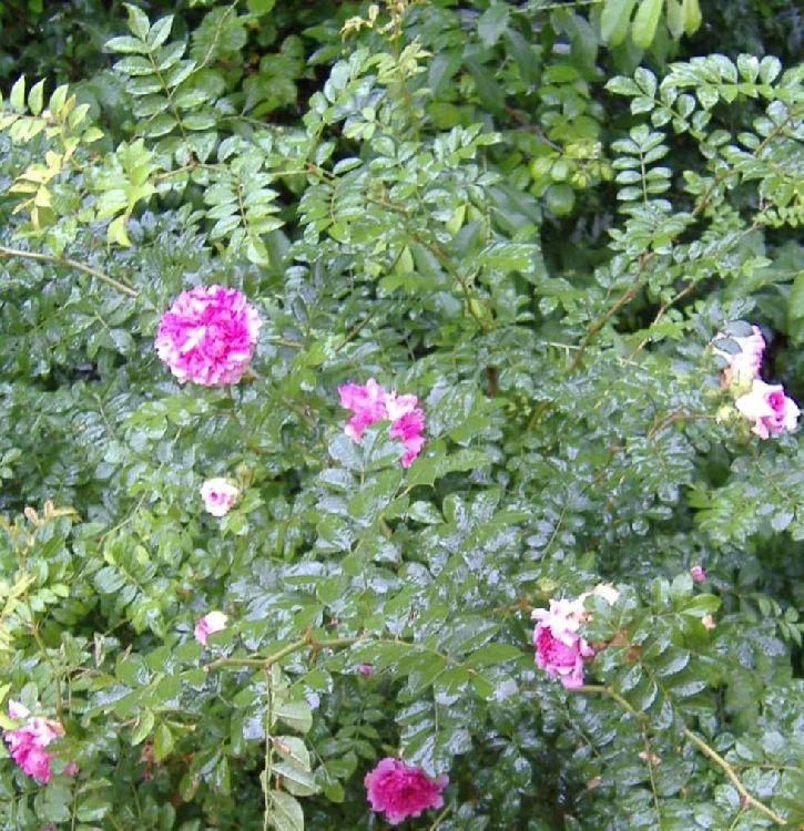 Капли на цветах  в Оазах Нимфи