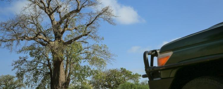 Национальный парк Западный Тсаво