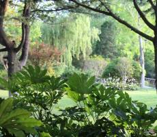 Виды в парке