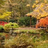 Государственный парк Синдзюку Гиоэн
