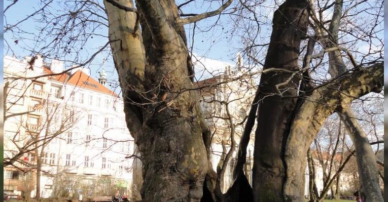 Старое дерево на газоне