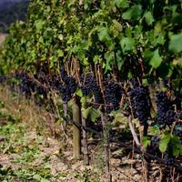Винодельни Приората