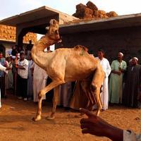 Верблюжий рынок Биркаша