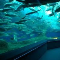 Океанариум Подводный мир