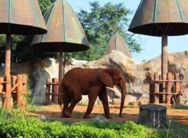 Зоопарк Накхон Ратчасима