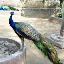 Зоопарк Alipore Zoo