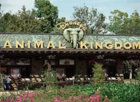 Тематический парк развлечений Disney's Animal Kingdom