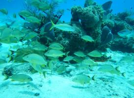 Chankanaab Reef