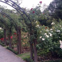 Ботанические сады Крайстчерча