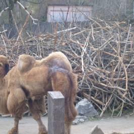 Цюрихский зоопарк