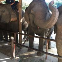 Thai Elephant Conservation Center