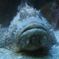 Rovinj Aquarium (Ruder Boskovic Institute)