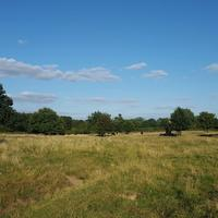 Hatfield Forest Nature Reserve