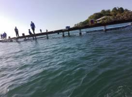 Roatan Institute for Marine Sciences - Anthony's Key Resort