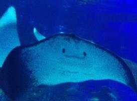 Пусан аквариум