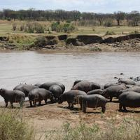 Serengeti Hippo Pool