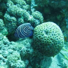 African Divers Nuweiba