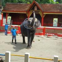 Зоопарк Пхукета