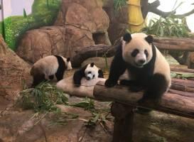 Сафари парк Сян Цзян