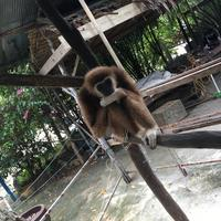 Samui Monkey Theatre
