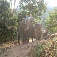 Maetaman Elephant Camp