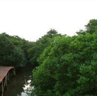 Bamenwan Mangrove Forest