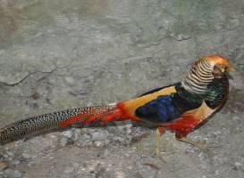 Чиангмайский зоопарк