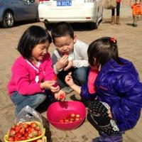 Beijing Tianyi Strawberry Ecological Park