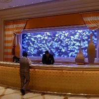 Moon Jellyfish Aquarium