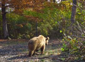 Libearty Bear Sanctuary Zarnesti