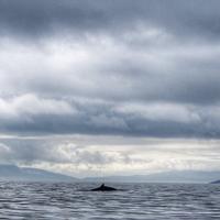 Bella Jane Boat Trips & AquaXplore