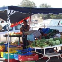 Duck Pond Market