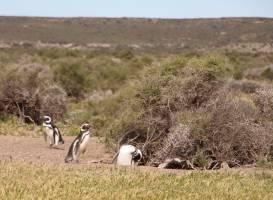 Estancia San Lorenzo, Pinguins Land