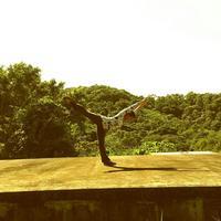 Blue Harbor Tropical Arboretum
