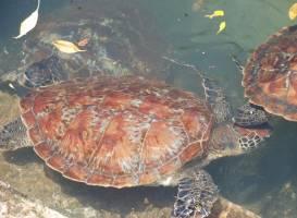 Nungwi Natural Aquarium