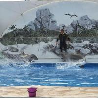 Севастопольский дельфинарий в Артбухте
