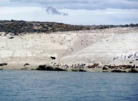 Costas de Patagonia