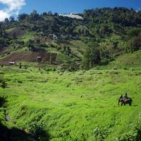 Elephantridingchiangmai