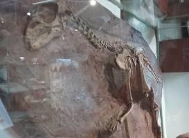 Museo del Lago Gutierrez