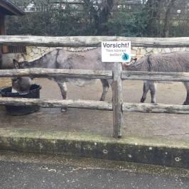 Tierpark Aachen