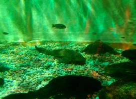Matlock Bath Aquarium & exhibitions