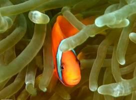 Aqua Ventura Divers