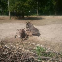 Луцкий зоопарк