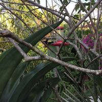 Barney's Hummingbird Garden Jamaica