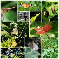 Fung Yuen Butterfly Reserve